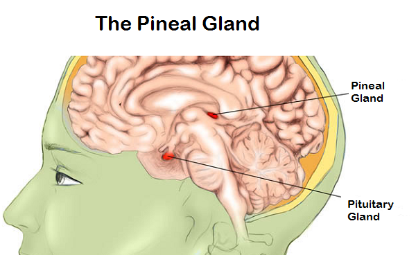 know about pineal gland and diagnosis of disorders related to it, Sphenoid
