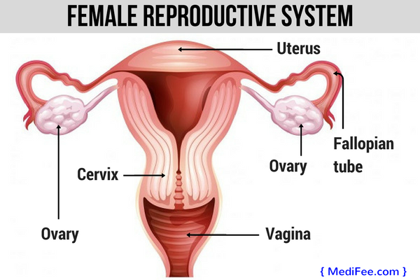 female-reproductive-system-PCOS