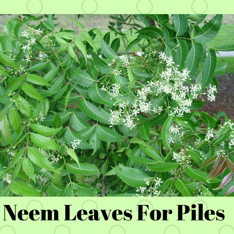 Neem-Leaves-For-Piles
